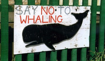 no whaling