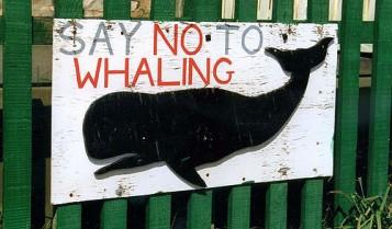 no whaling